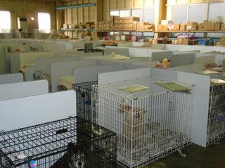 2011.8.飯野シェルター開設4か月目頃の犬舎.jpg